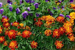 flowers-1236598_960_720