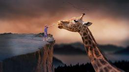 giraffe-1959110_960_720