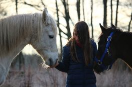 horse-1130177_960_720