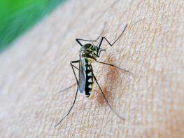 mosquito-213806_960_720