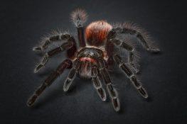 spider-1772769_960_720